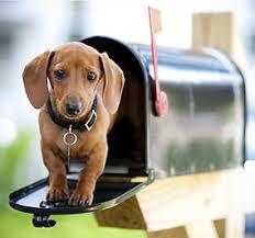 post-hund
